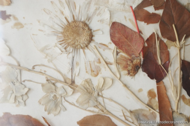 Pressed flowers  I  A lost art